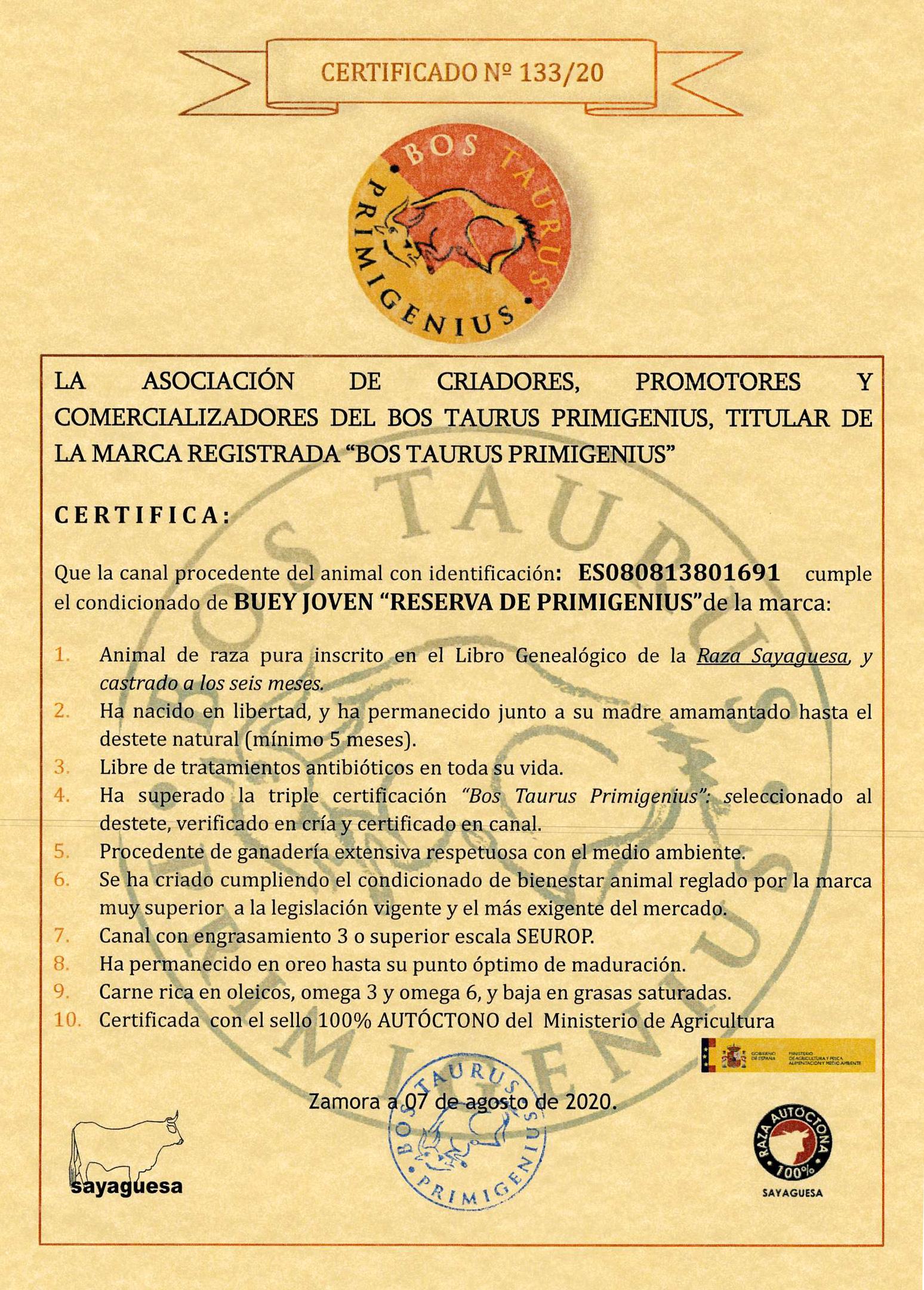 CERTIFICADO BUEY JOVEN PRIMIGENIUS